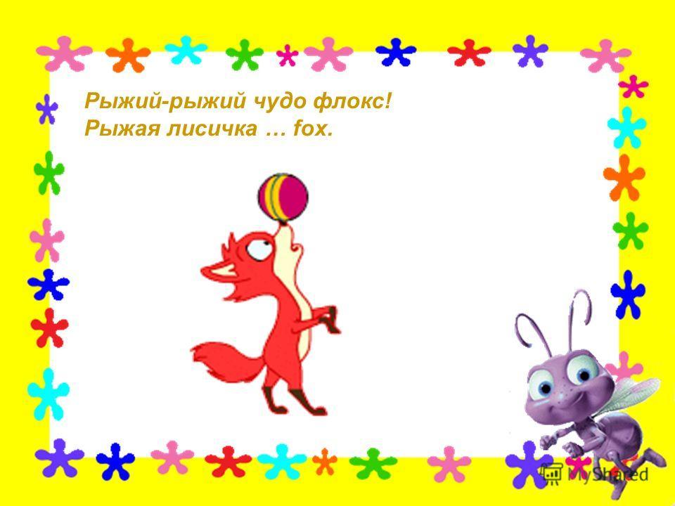 Рыжий-рыжий чудо флокс! Рыжая лисичка … fox.