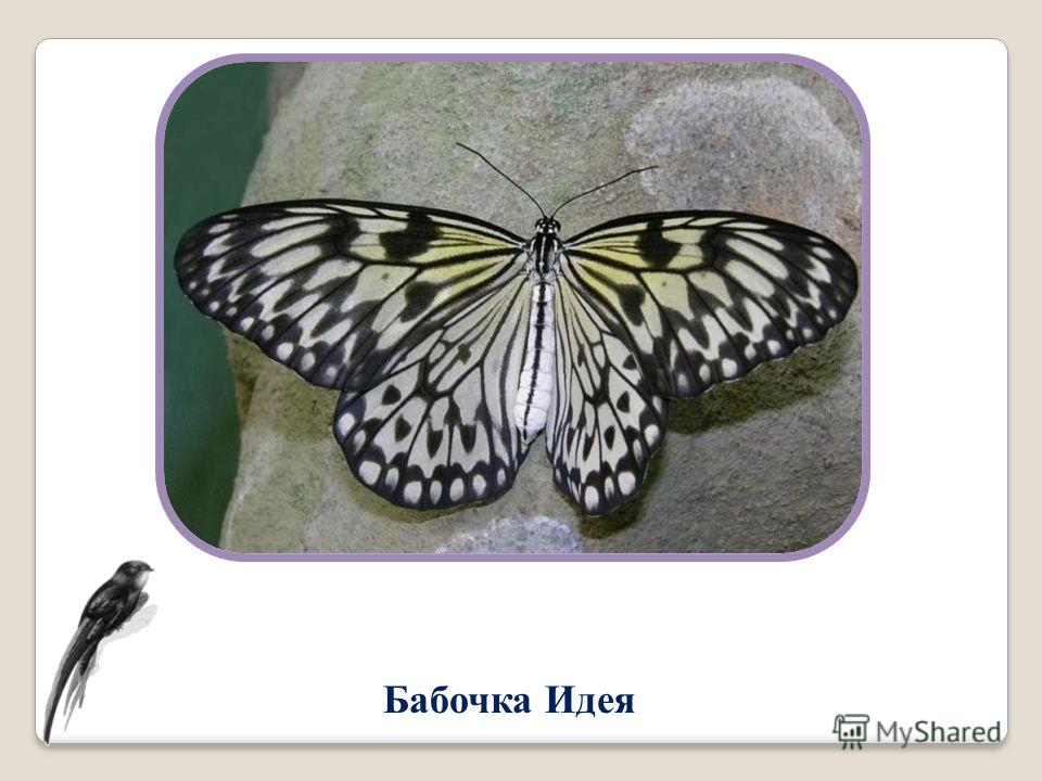 Бабочка Идея