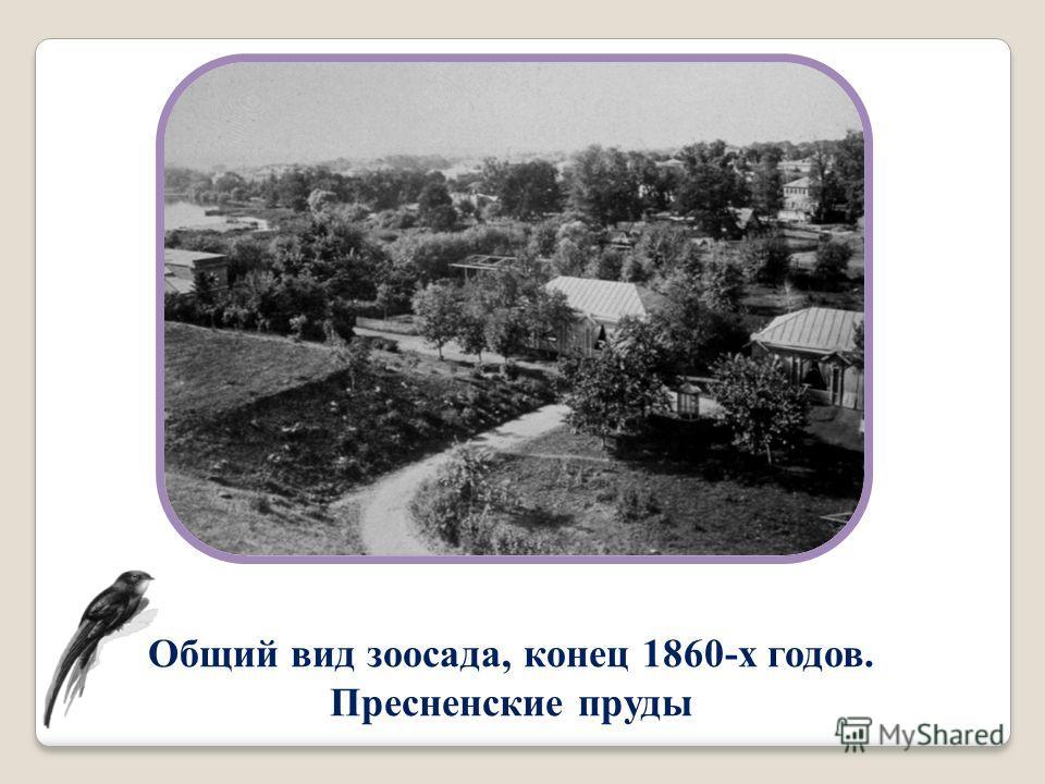 Общий вид зоосада, конец 1860-х годов. Пресненские пруды