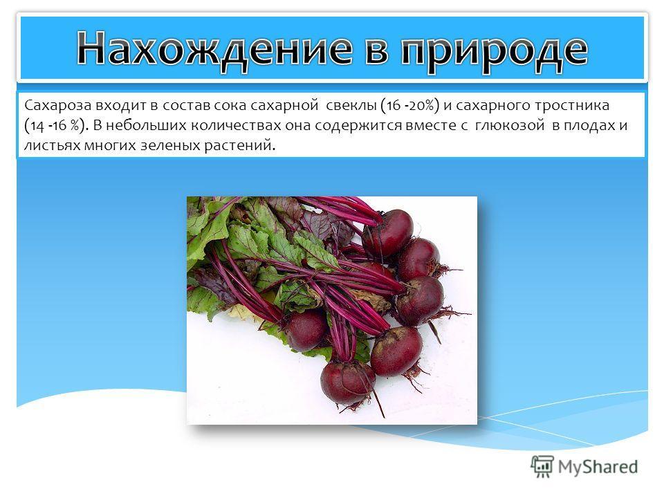 Сахароза входит в состав сока сахарной свеклы (16 -20%) и сахарного тростника (14 -16 %). В небольших количествах она содержится вместе с глюкозой в плодах и листьях многих зеленых растений.