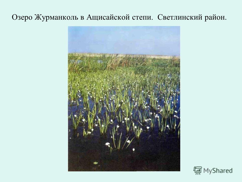 Пятисотлетняя реликтовая листвинница. Адамовский район.
