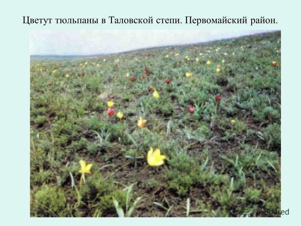 Сосновое редколесье в Кваркенском Зауралье. Кваркенский район