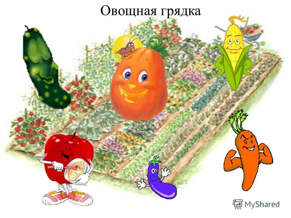 Овощная грядка