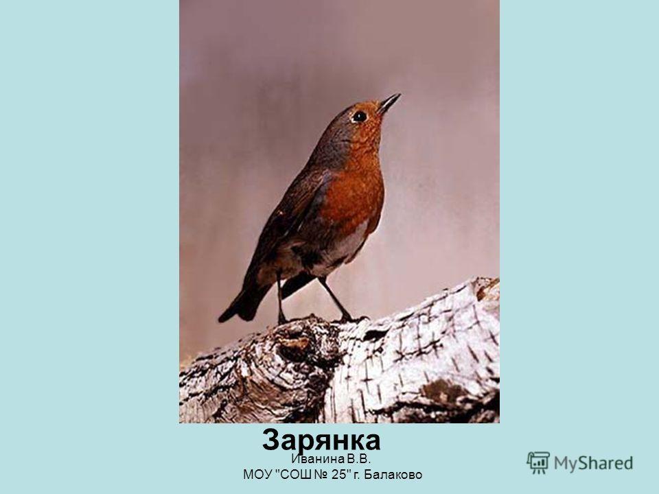 Иванина В.В. МОУ СОШ 25 г. Балаково Сокол