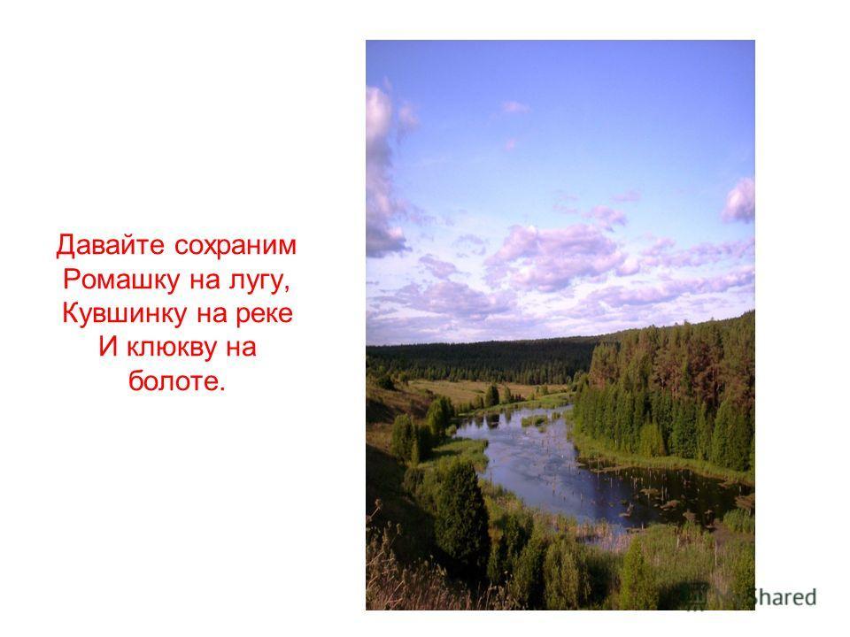 Давайте сохраним Ромашку на лугу, Кувшинку на реке И клюкву на болоте.