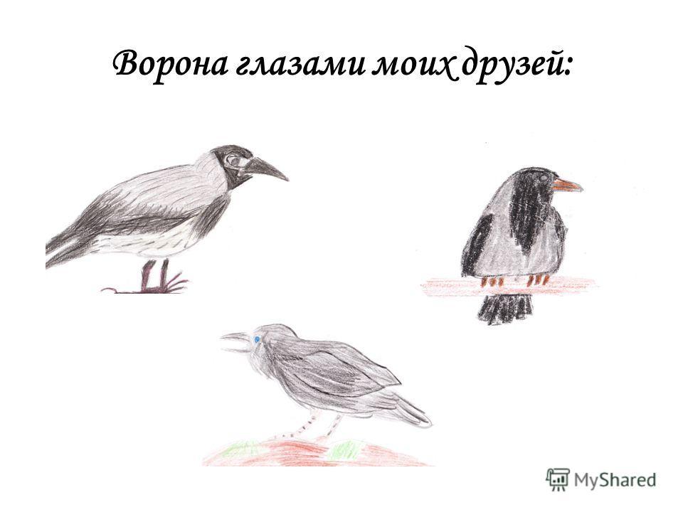 Ворона глазами моих друзей: