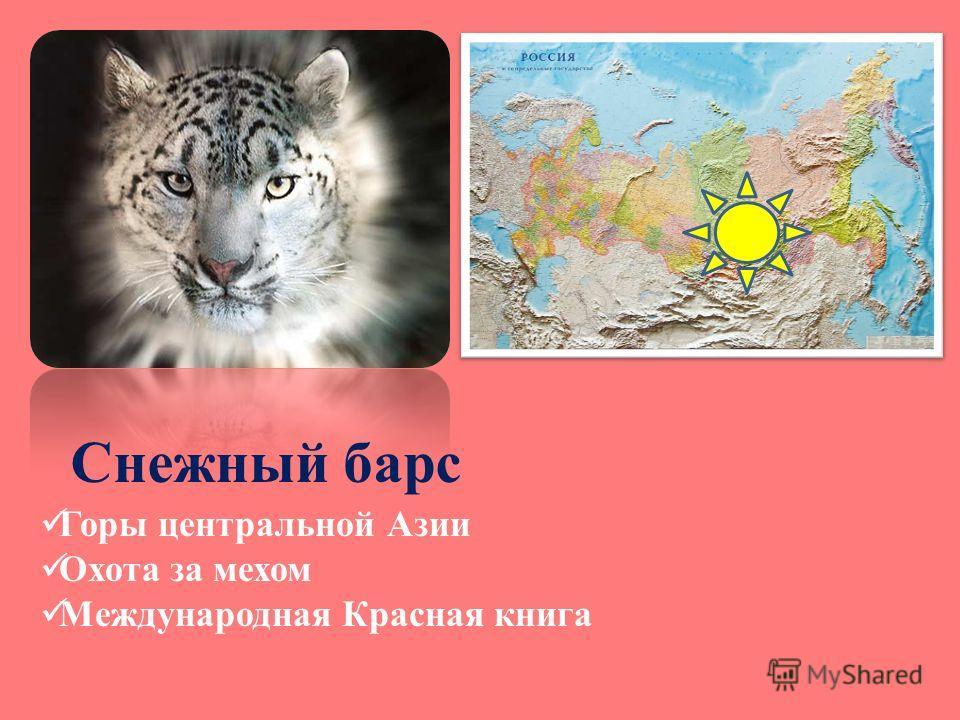 Снежный барс Горы центральной Азии Охота за мехом Международная Красная книга
