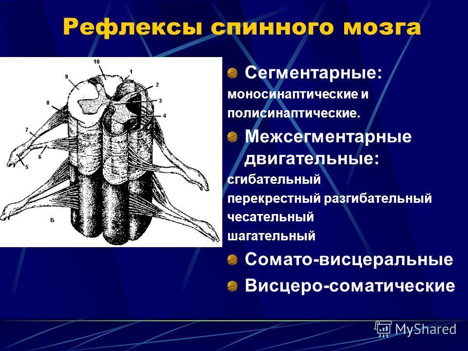 Рефлексы спинного мозга Сегментарные: моносинаптические и полисинаптические. Межсегментарные двигательные: сгибательный перекрестный разгибательный чесательный шагательный Сомато-висцеральные Висцеро-соматические