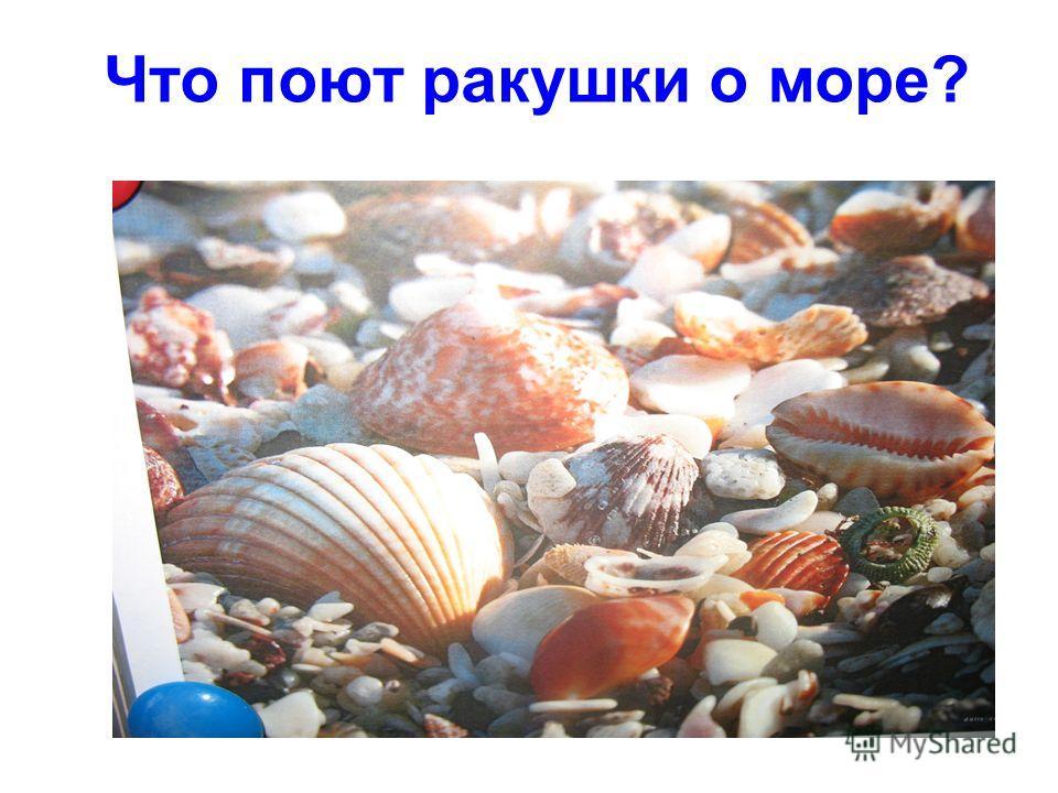 Что поют ракушки о море?