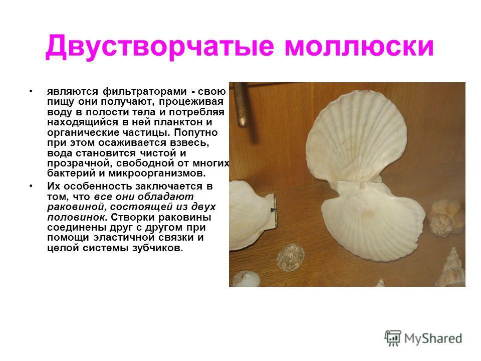 Двустворчатые моллюски являются фильтраторами - свою пищу они получают, процеживая воду в полости тела и потребляя находящийся в ней планктон и органические частицы. Попутно при этом осаживается взвесь, вода становится чистой и прозрачной, свободной