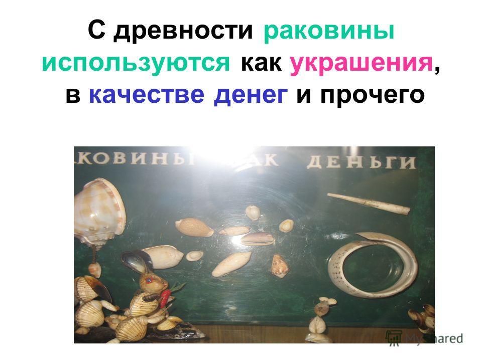 С древности раковины используются как украшения, в качестве денег и прочего