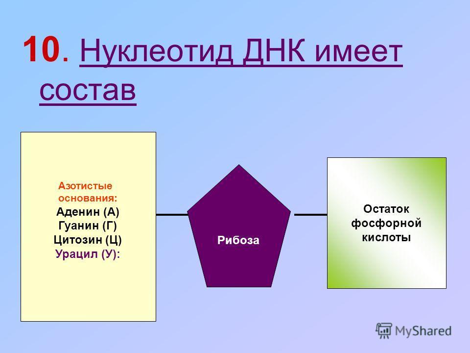 10. Нуклеотид ДНК имеет состав Азотистые основания: Аденин (А) Гуанин (Г) Цитозин (Ц) Урацил (У): Рибоза Остаток фосфорной кислоты
