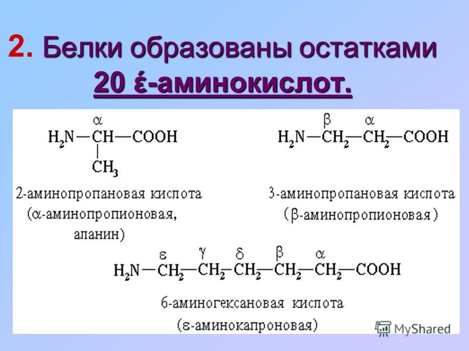 Белки образованы остатками 20 έ-аминокислот. 2. Белки образованы остатками 20 έ-аминокислот.