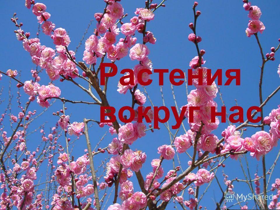 Растения вокруг нас Растения вокруг нас