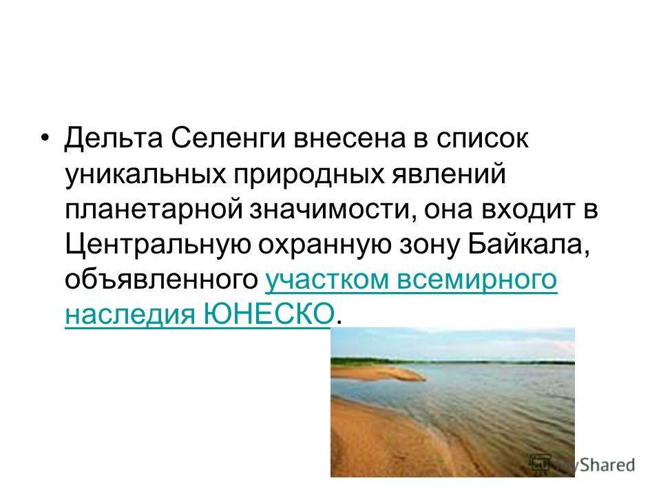 Дельта Селенги внесена в список уникальных природных явлений планетарной значимости, она входит в Центральную охранную зону Байкала, объявленного участком всемирного наследия ЮНЕСКО.участком всемирного наследия ЮНЕСКО