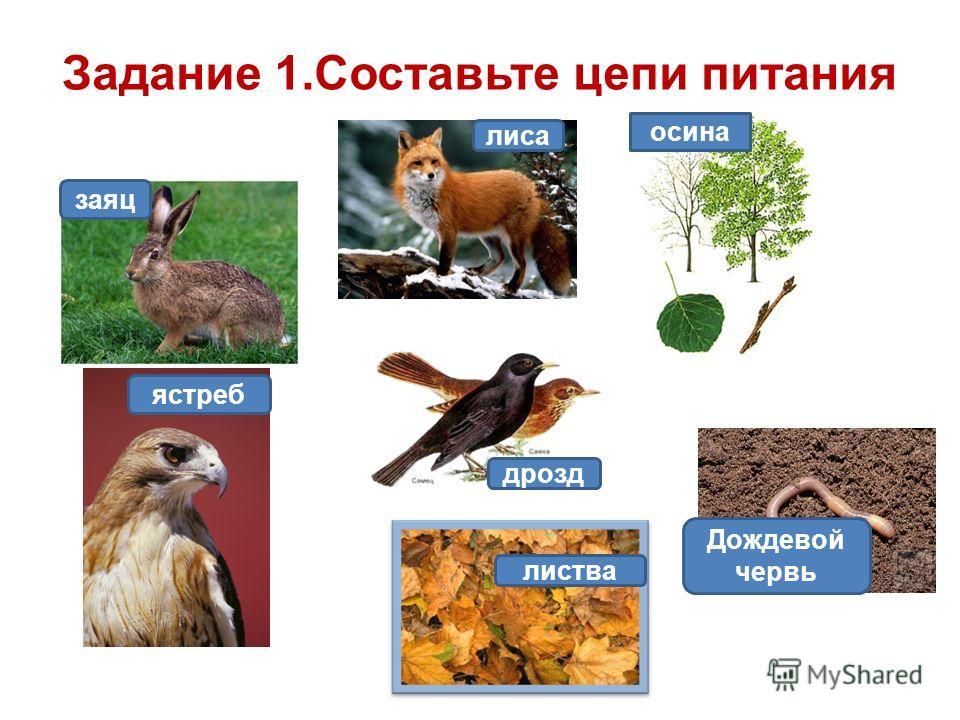 Задание 1. Составьте цепи питания заяц лиса осина дрозд листва Дождевой червь ястреб