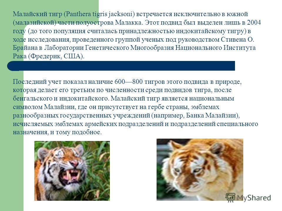 Малайский тигр (Panthera tigris jacksoni) встречается исключительно в южной (малазийской) части полуострова Малакка. Этот подвид был выделен лишь в 2004 году (до того популяция считалась принадлежностью индокитайскому тигру) в ходе исследования, пров
