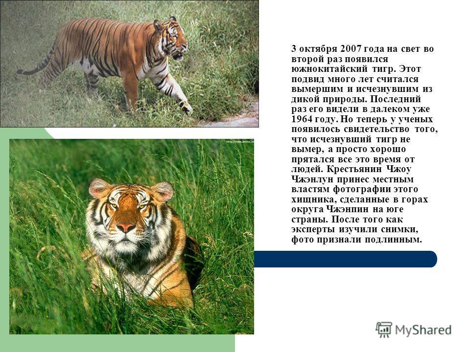 3 октября 2007 года на свет во второй раз появился южнокитайский тигр. Этот подвид много лет считался вымершим и исчезнувшим из дикой природы. Последний раз его видели в далеком уже 1964 году. Но теперь у ученых появилось свидетельство того, что исче