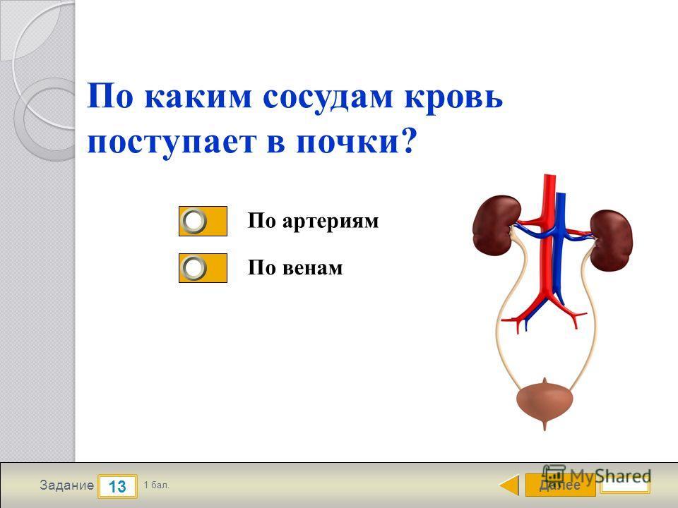 Далее 13 Задание 1 бал. По каким сосудам кровь поступает в почки? По артериям По венам