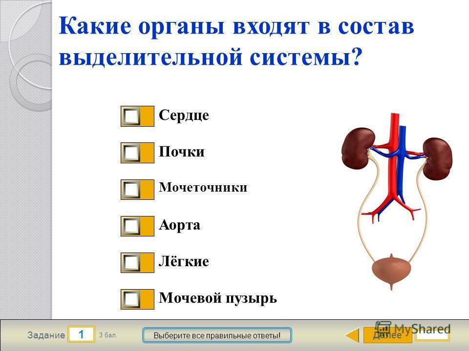 Далее 1 Задание 3 бал. Выберите все правильные ответы! Какие органы входят в состав выделительной системы? Сердце Почки Мочеточники Аорта Лёгкие Мочевой пузырь