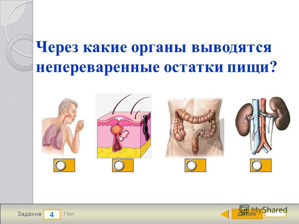 Далее 4 Задание 1 бал. Через какие органы выводятся непереваренные остатки пищи?