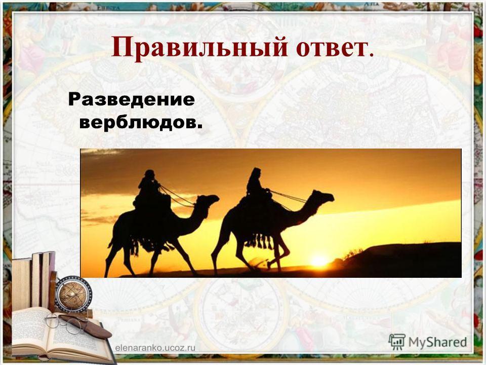 2 3 Выращивание винограда. Земледелие. Разведение верблюдов. 1 Главным занятием арабов – бедуинов было…? ?