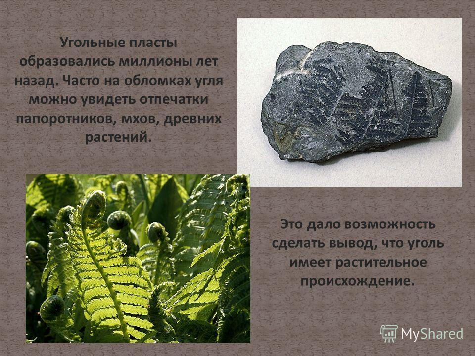 Угольные пласты образовались миллионы лет назад. Часто на обломках угля можно увидеть отпечатки папоротников, мхов, древних растений. Это дало возможность сделать вывод, что уголь имеет растительное происхождение.