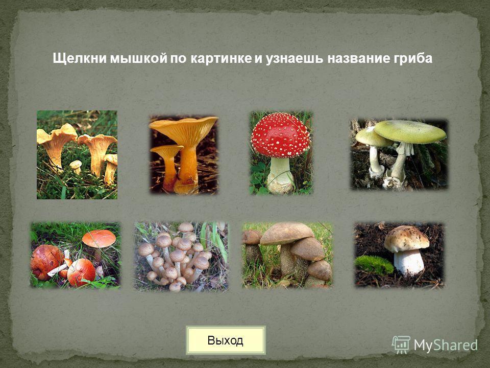 Щелкни мышкой по картинке и узнаешь название гриба Выход