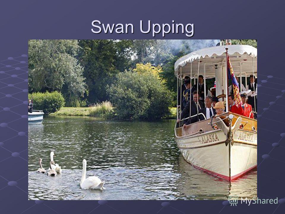 Swan Upping