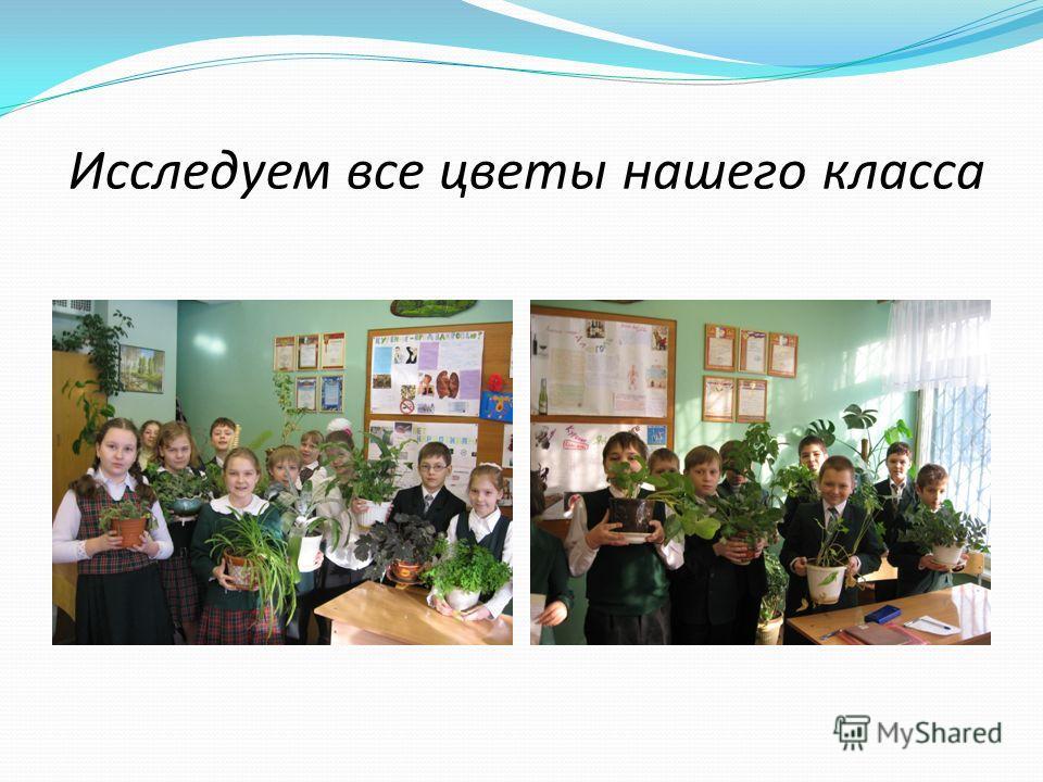 Исследуем все цветы нашего класса