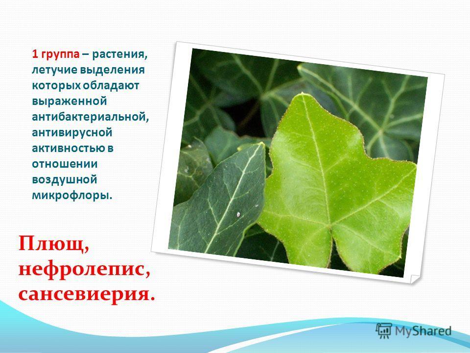 1 группа – растения, летучие выделения которых обладают выраженной антибактериальной, антивирусной активностью в отношении воздушной микрофлоры. Плющ, нефролепис, сансевиерия.