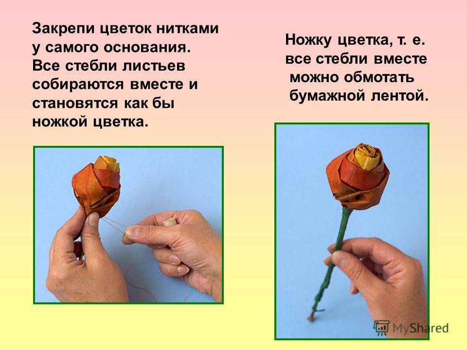 Закрепи цветок нитками у самого основания. Все стебли листьев собираются вместе и становятся как бы ножкой цветка. Ножку цветка, т. е. все стебли вместе можно обмотать бумажной лентой.