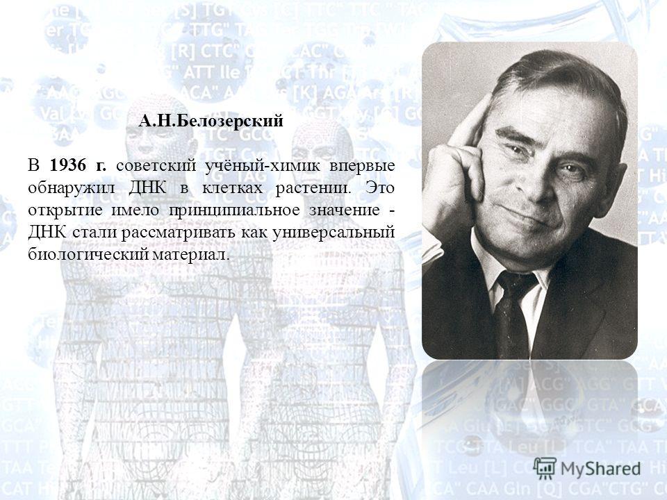 А.Н.Белозерский В 1936 г. советский учёный-химик впервые обнаружил ДНК в клетках растении. Это открытие имело принципиальное значение - ДНК стали рассматривать как универсальный биологический материал.