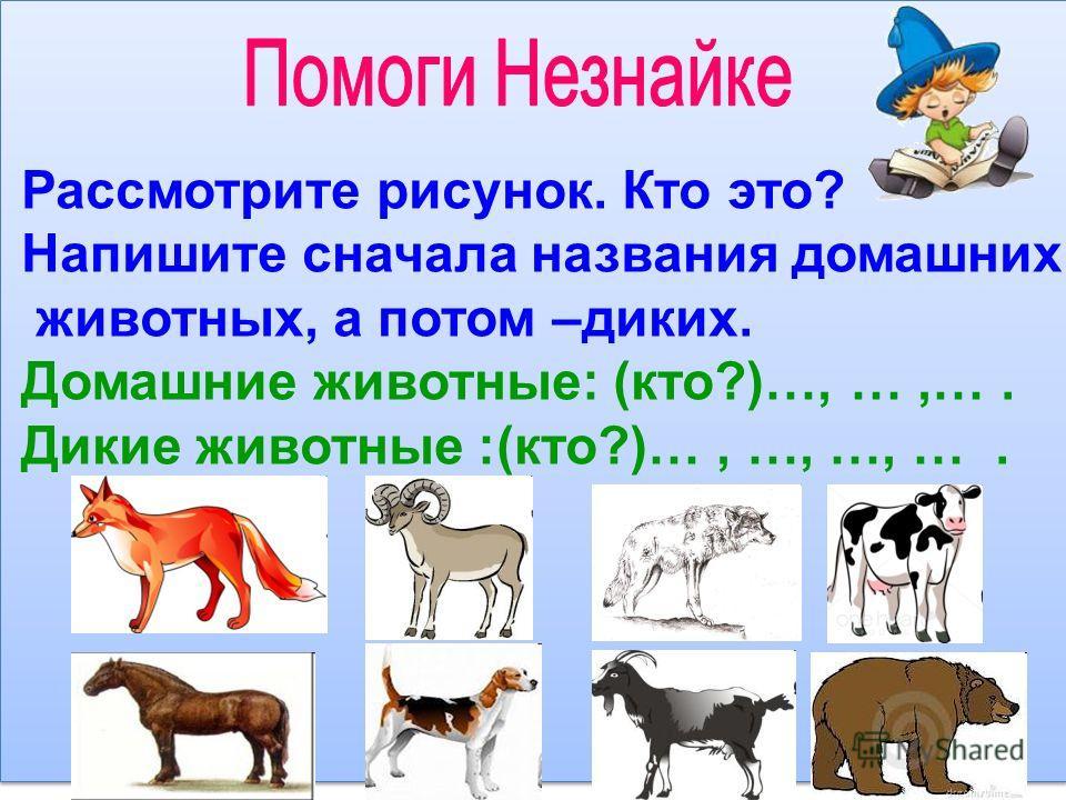Рассмотрите рисунок. Кто это? Напишите сначала названия домашних животных, а потом –диких. Домашние животные: (кто?)…, …,…. Дикие животные :(кто?)…, …, …, ….