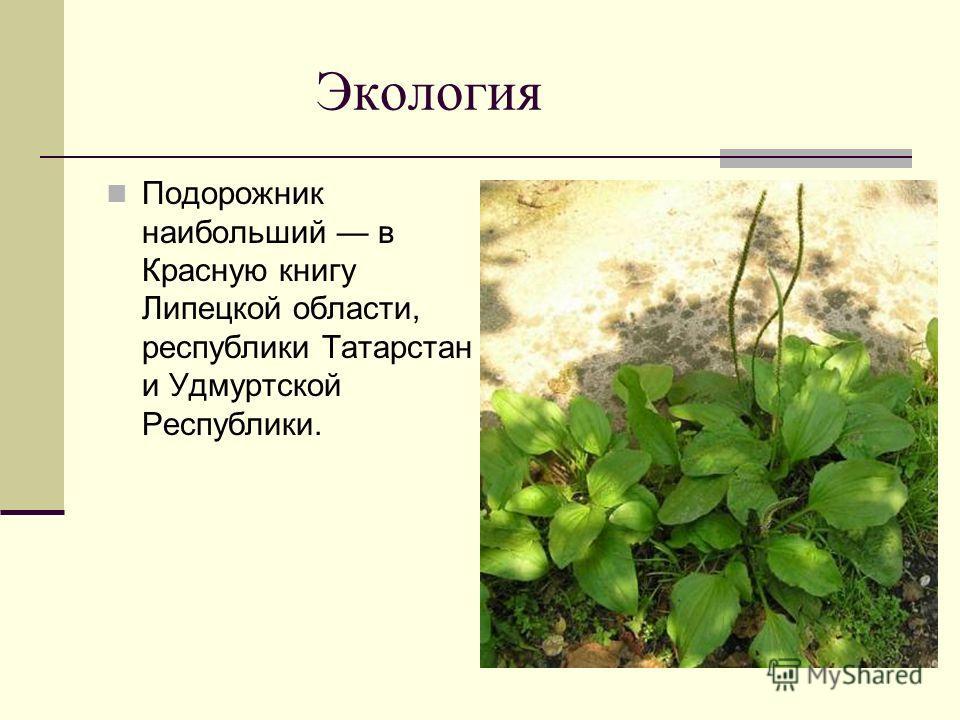 Экология Подорожник наибольший в Красную книгу Липецкой области, республики Татарстан и Удмуртской Республики.