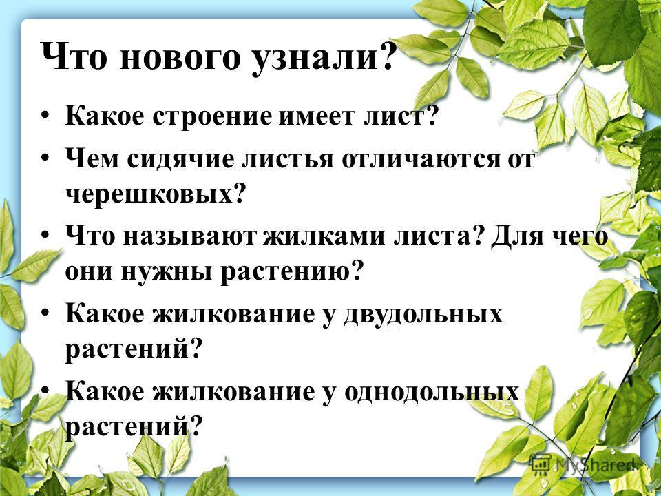 Что нового узнали? Какое строение имеет лист? Чем сидячие листья отличаются от черешковых? Что называют жилками листа? Для чего они нужны растению? Какое жилкование у двудольных растений? Какое жилкование у однодольных растений?