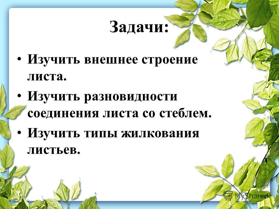 Задачи: Изучить внешнее строение листа. Изучить разновидности соединения листа со стеблем. Изучить типы жилкования листьев.