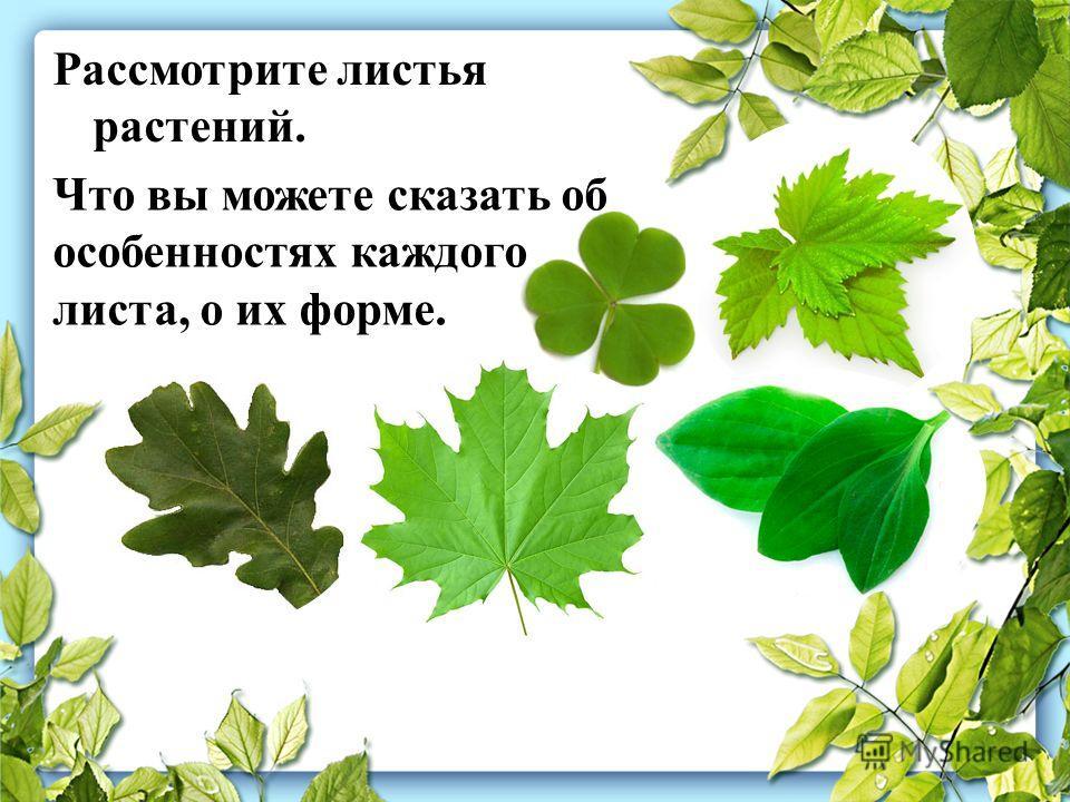 Рассмотрите листья растений. Что вы можете сказать об особенностях каждого листа, о их форме.