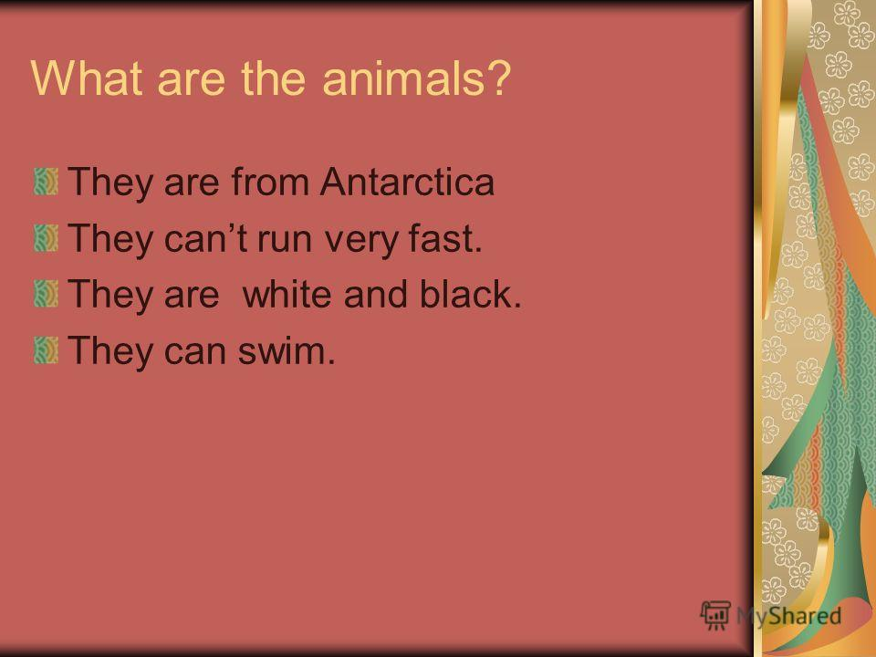 What are the animals? They are from Antarctica They cant run very fast. They are white and black. They can swim.
