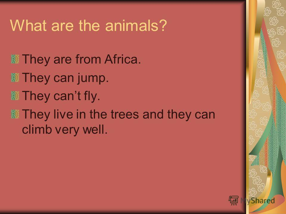 What are the animals? They are from Africa. They can jump. They cant fly. They live in the trees and they can climb very well.