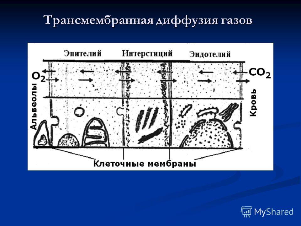 Трансмембранная диффузия газов
