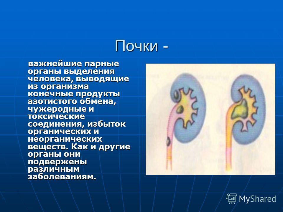 Почки - важнейшие парные органы выделения человека, выводящие из организма конечные продукты азотистого обмена, чужеродные и токсические соединения, избыток органических и неорганических веществ. Как и другие органы они подвержены различным заболеван