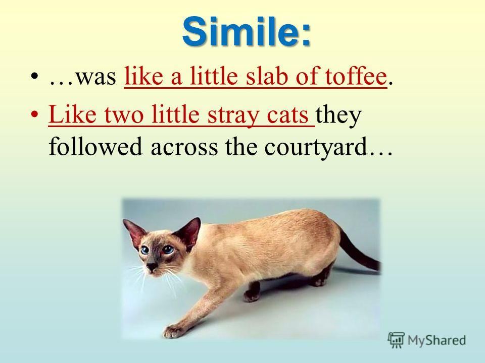 Simile: …was like a little slab of toffee. Like two little stray cats they followed across the courtyard…