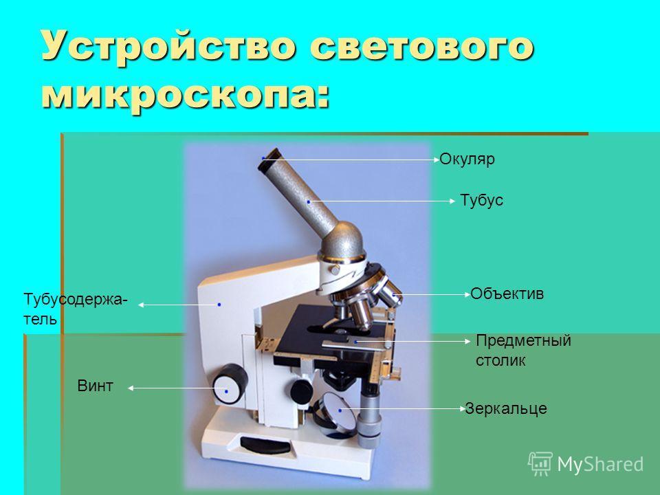 Устройство светового микроскопа: Окуляр Тубус Объектив Предметный столик Зеркальце Тубусодержа- тель Винт