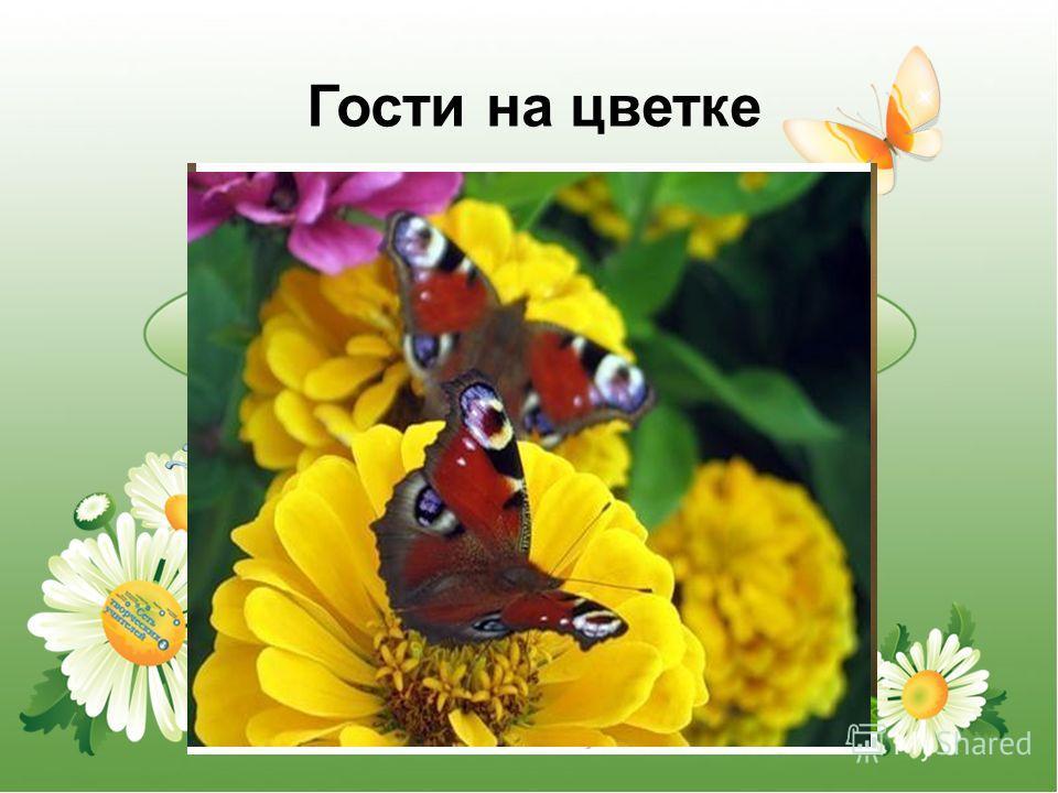 Гости на цветке