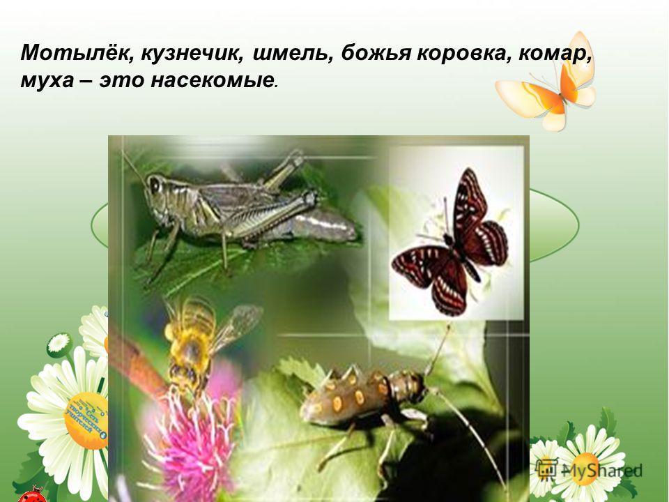 Мотылёк, кузнечик, шмель, божья коровка, комар, муха – это насекомые.