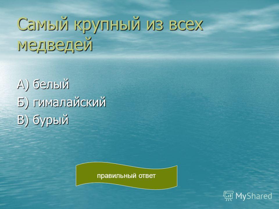 Самый крупный из всех медведей А) белый Б) гималайский В) бурый правильный ответ