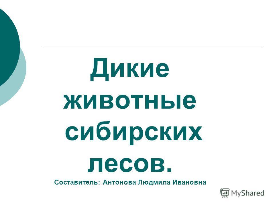 Дикие животные сибирских лесов. Составитель: Антонова Людмила Ивановна