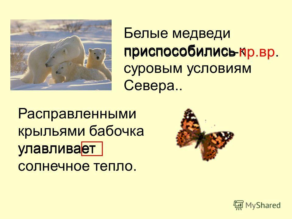 Белые медведи приспособились к суровым условиям Севера.. Расправленными крыльями бабочка улавливает солнечное тепло. приспособились улавливает -пр.вр.