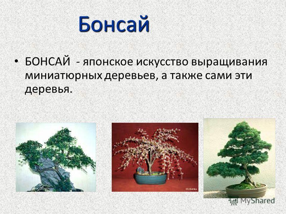Бонсай БОНСАЙ - японское искусство выращивания миниатюрных деревьев, а также сами эти деревья.